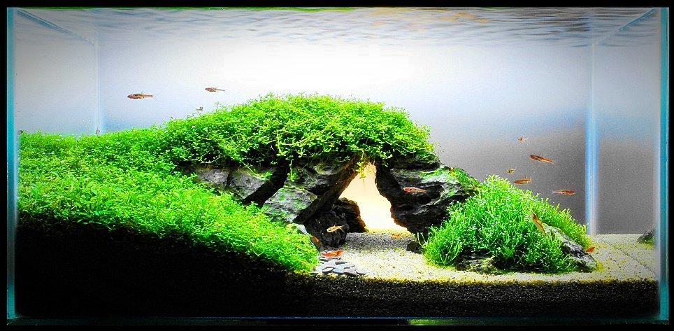 Selamat pagi Indonesia! Nih guys yang mau rumahnya tambah keren, aquascape bisa jadi pilihannya :) https://t.co/DtBakC9s20