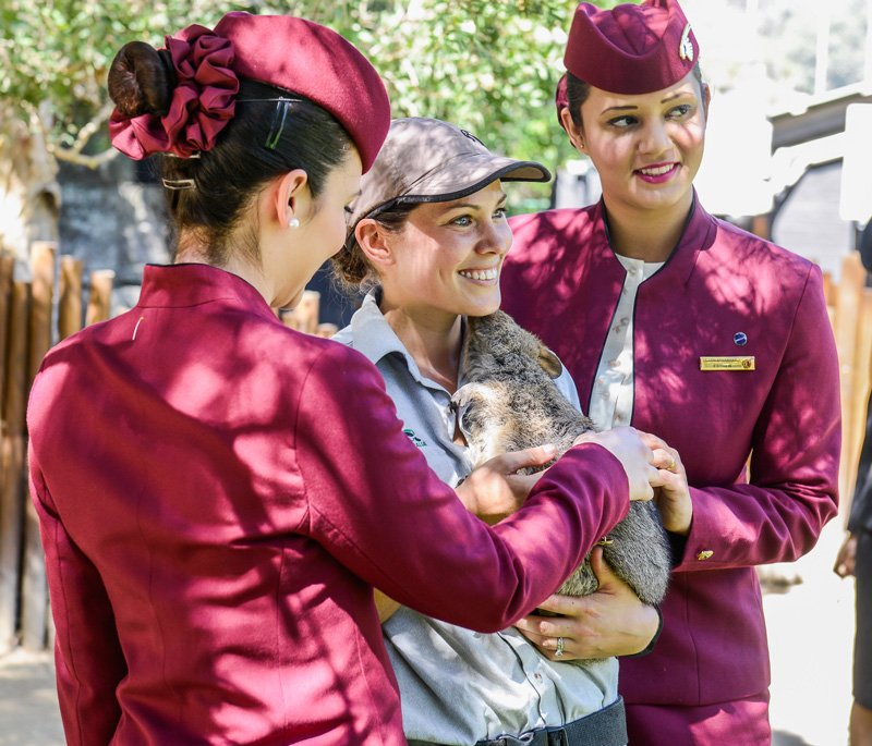 Watch our Cabin Crew meet the Australian wildlife at Sydney's @TarongaZoo: