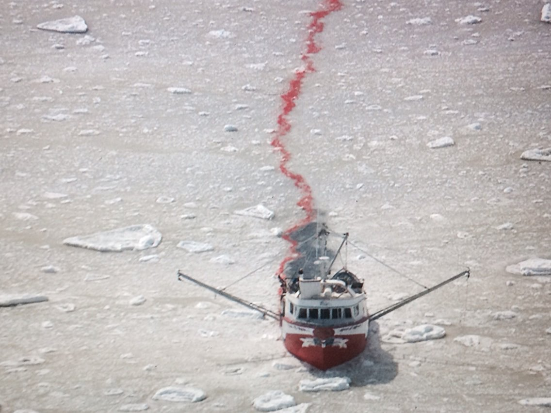 RT @RebeccaAldworth: The commercial #sealhunt has begun. HSI is the only NGO here to expose the cruelty. https://t.co/XZpIRRvKgK