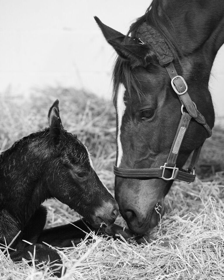 So terribly sad to hear that #Zenyatta has lost her beautiful colt by War Front. My heart goes out to the family.