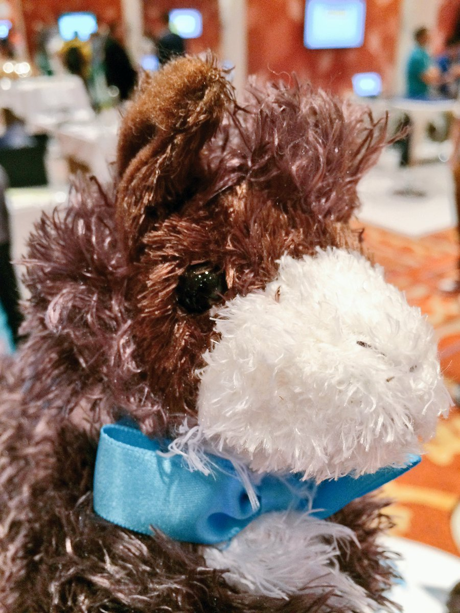 blackbooker: Haven't gotten your llama yet? Stop by the @classyllama booth and get one!! #MagentoImagine #LlamaSwag https://t.co/KTD4rW2G2H