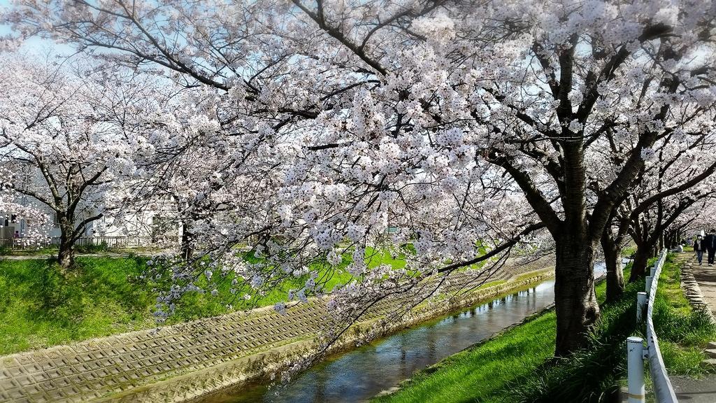 奈良市の佐保川沿い。 5㎞に渡る1000本もの桜並木は圧巻です。 https://t.co/IJcL0KeQrp