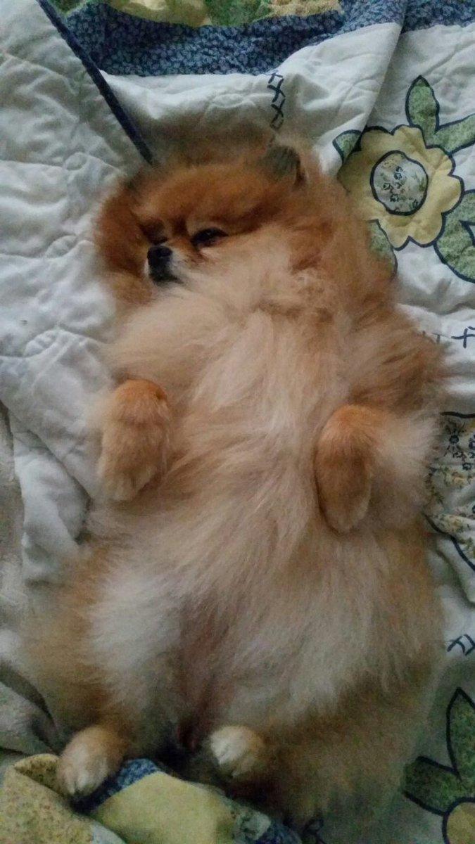 You know you want to rub my tummy #tummyrub https://t.co/1NEdD7Elo8