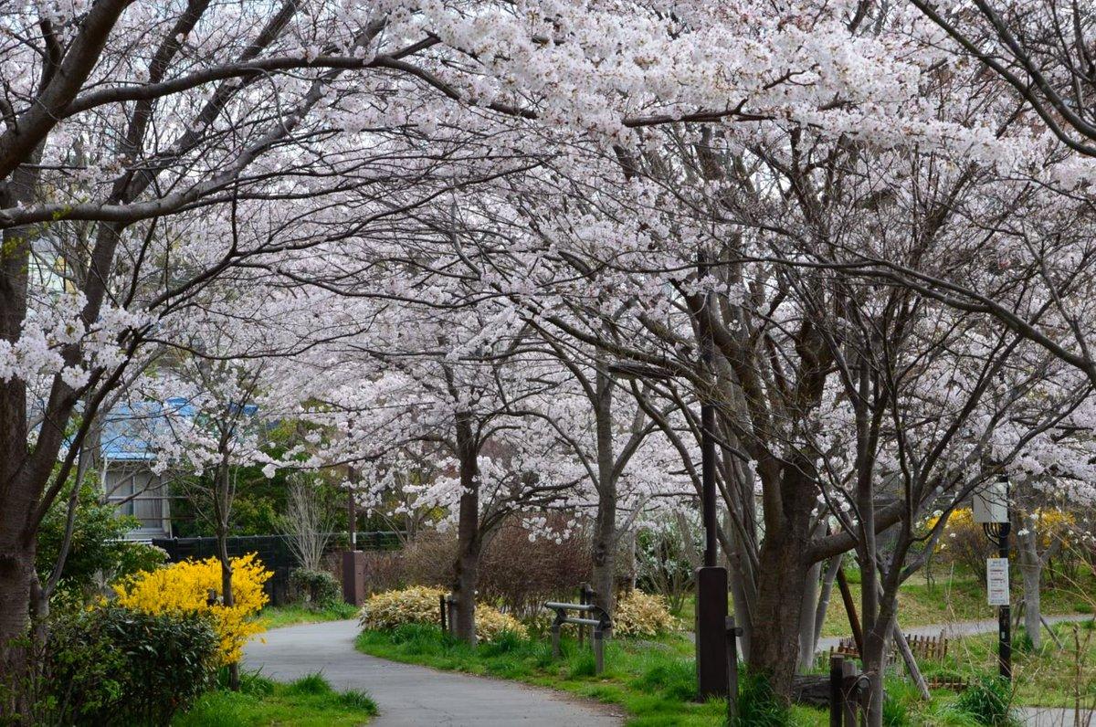 A springtime walk around the neighborhood #1 https://t.co/w7GCW8Mmd4