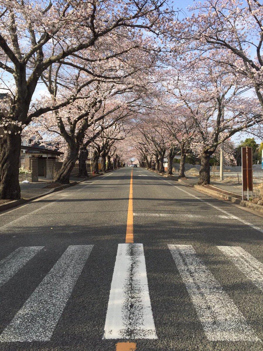 富岡町夜ノ森の桜のトンネル。 きょううちのスタッフが撮った写真です。5年経っても何も変わらず、みんなの帰りを待っている桜。福島はまだ現在進行形です。 https://t.co/21qEMm1lq9