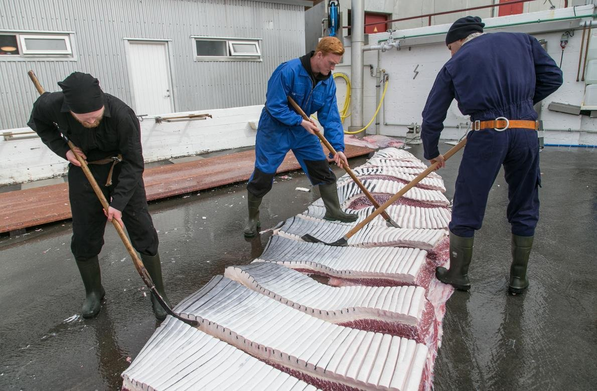 RT @Aus4Dolphins: Meat from Norwegian #whale hunts are now ending up as feed for #animals on #fur #farms. https://t.co/o1seoI0qt6 https://t…