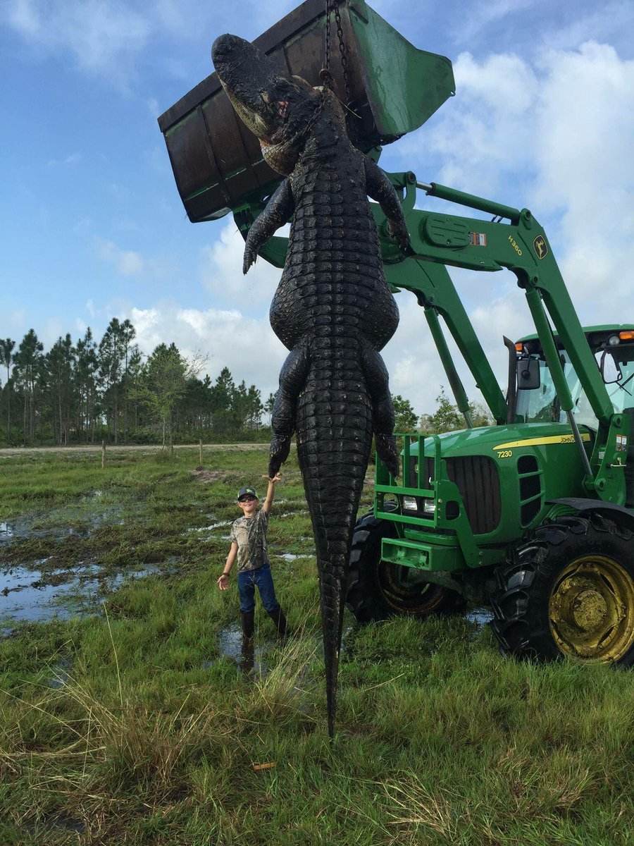 Florida is so gnarly man!! They just caught a 15ft gator that was eating people's cows lol https://t.co/b6XDHJN186