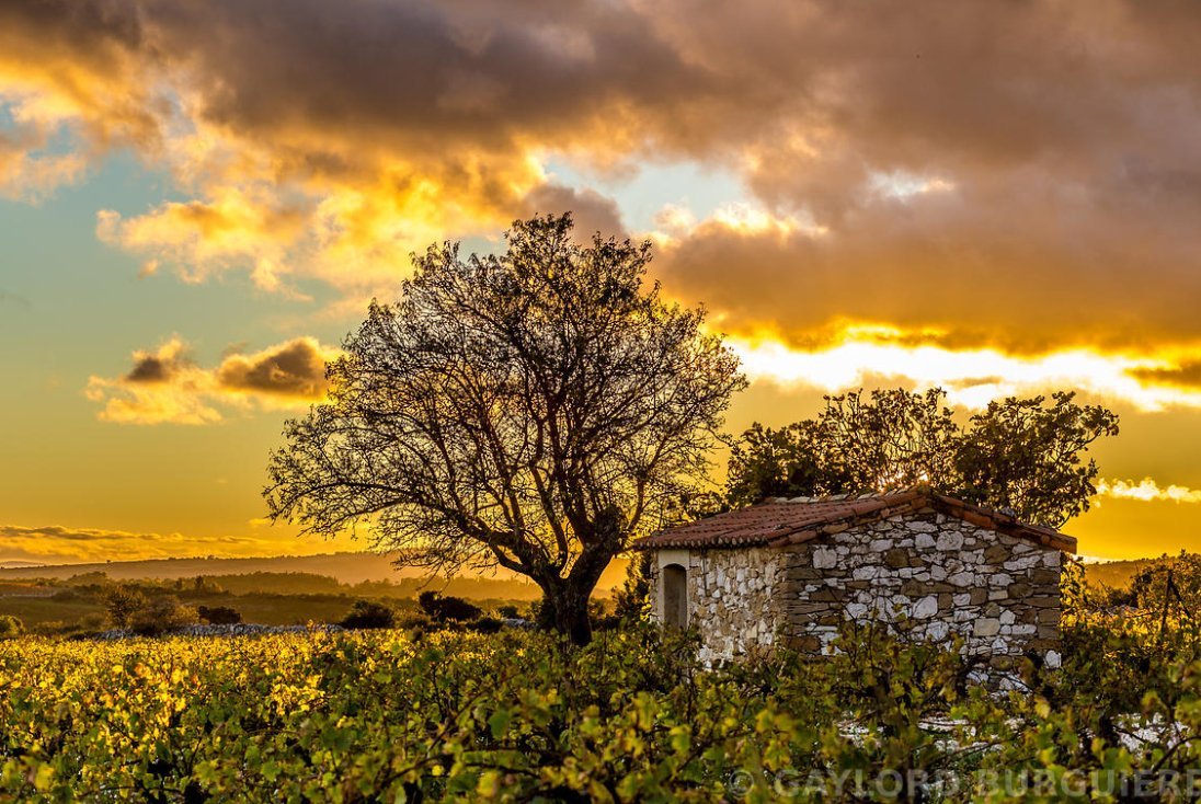 Great work of @AOCSaintChinian who captures the region of Languedoc like no one else can https://t.co/rKIXEsOFBb https://t.co/Uhcz2S8n8z