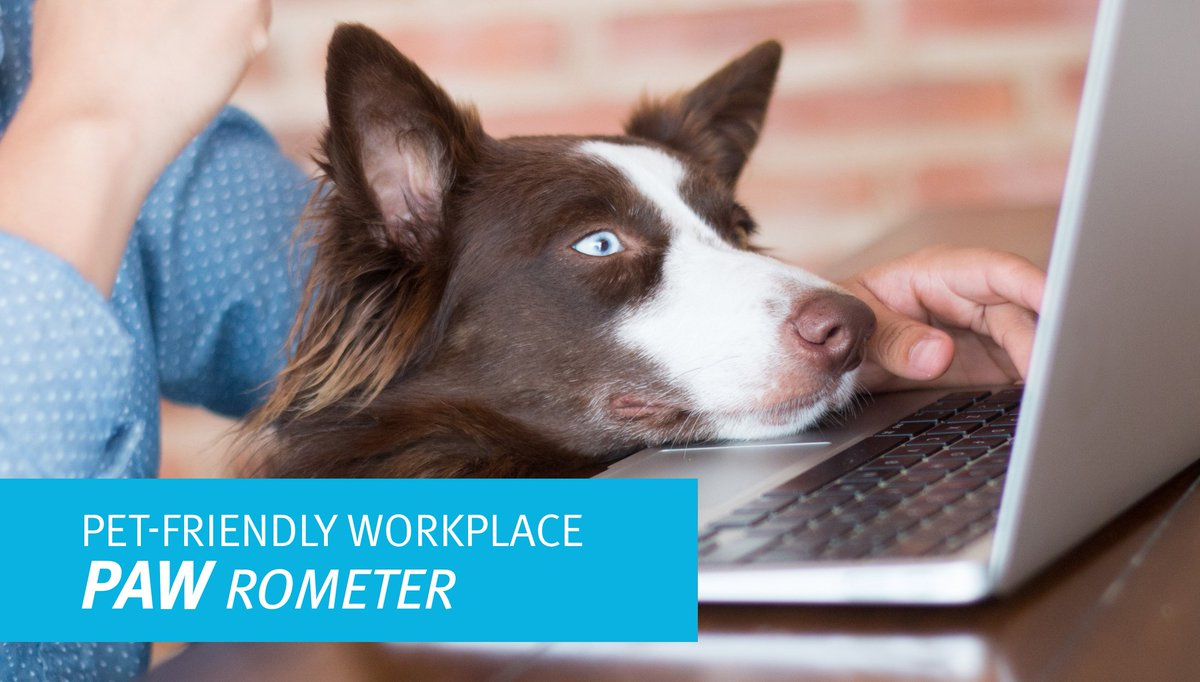 We aren't the only one benefitting from a pet-friendly workplace. See the impact: https://t.co/OLgJ5KFwgq https://t.co/jJgRMeSzrW