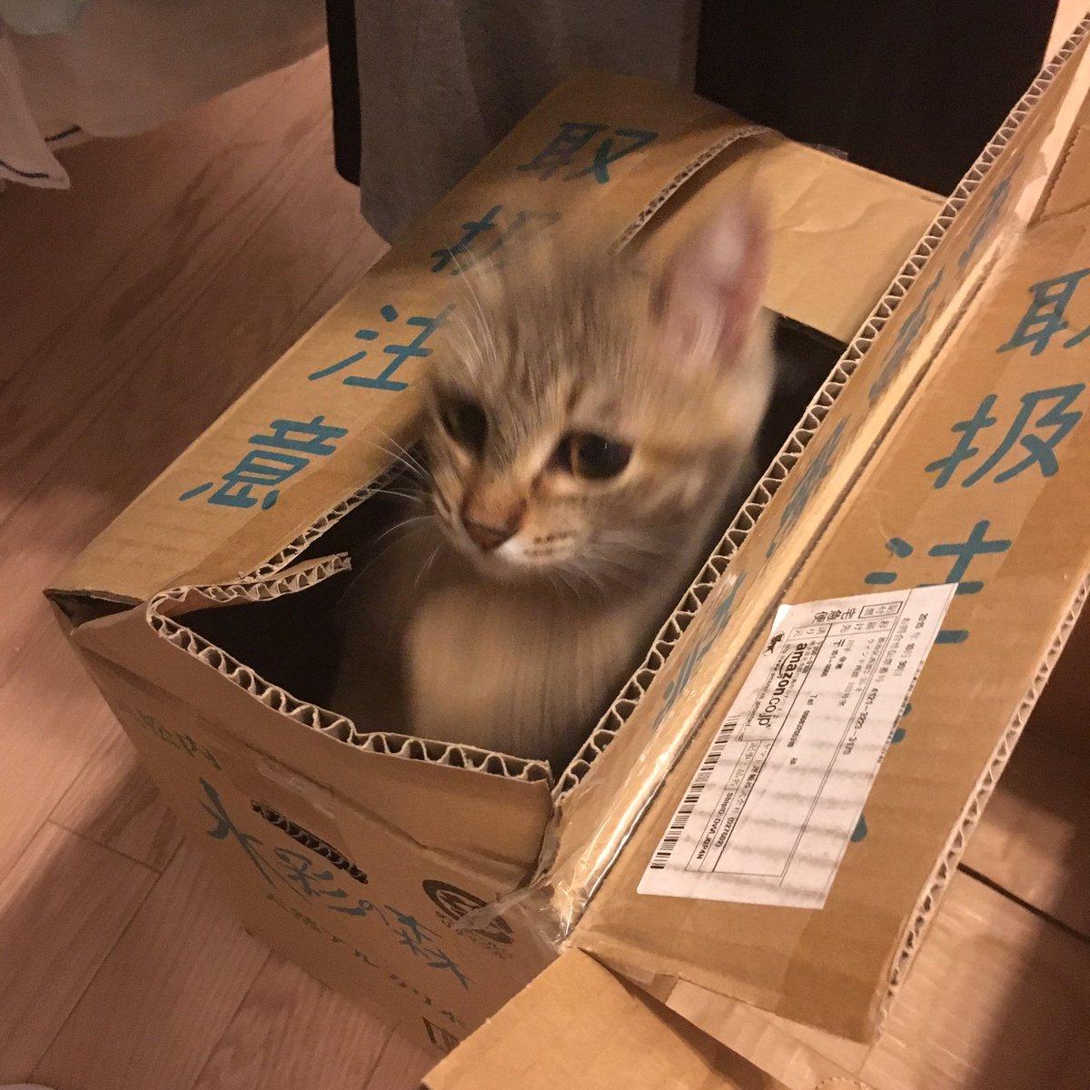 箱から猫が爆発的に発生する瞬間 https://t.co/jjN04FKxH1