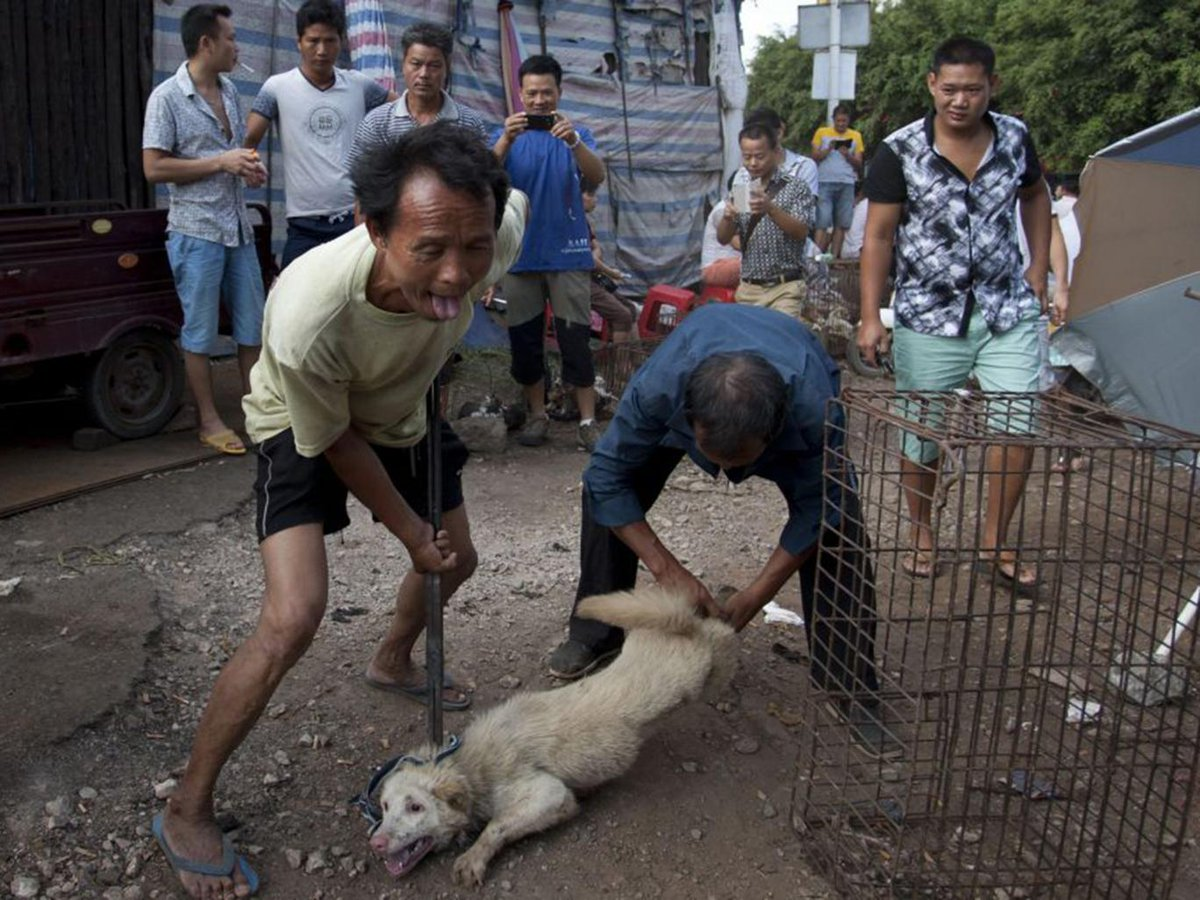 RT @LC4A: Never heard of Yulin?  You Will. https://t.co/zw56RdPkW0 #StopYulin #StopYulin2016 https://t.co/VbKG8uwb3S