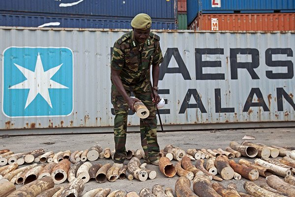 Two fined Sh63 million or life in prison for illegal possession of ivory