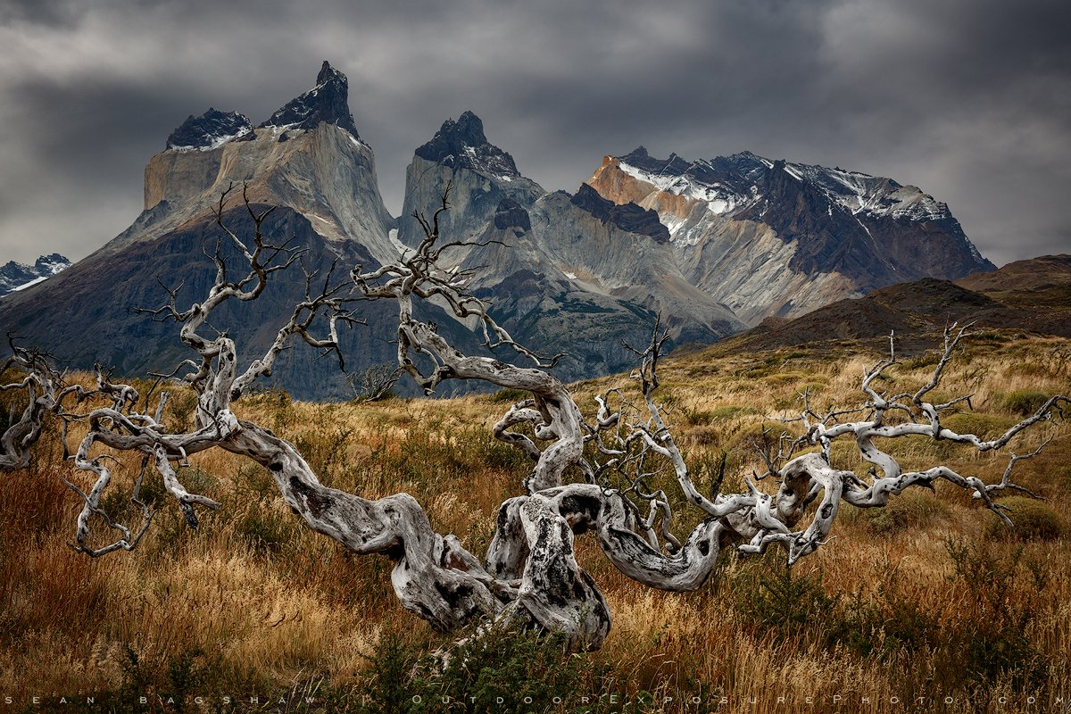 """""""Wood and Stone"""" Fires have left many dead trees throughout Torres del Paine National Park. https://t.co/EPT7a7gdks https://t.co/KYuOvqagbQ"""