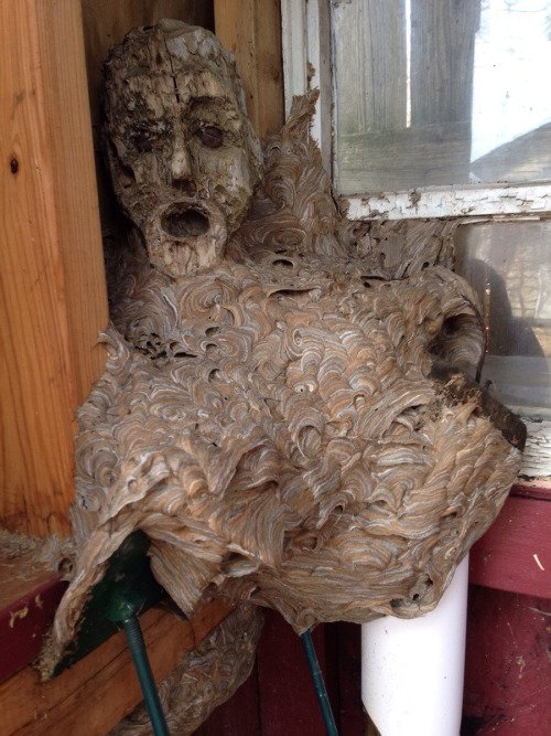 Hornets nest forms around a mask in a shed and creates a living nightmare. https://t.co/83lWDGSpv3