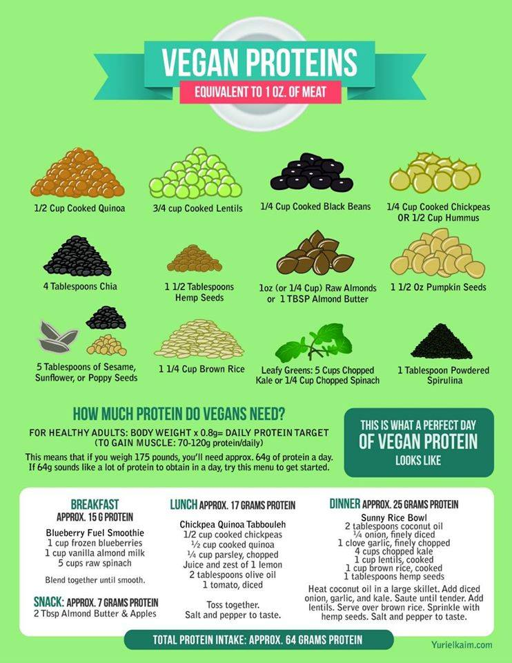 Great info on this #PlantBased Protein graphic: #healthy #health #vegan #vegetarian #meatless #eatclean #meatfree https://t.co/fOHe6FqQxc