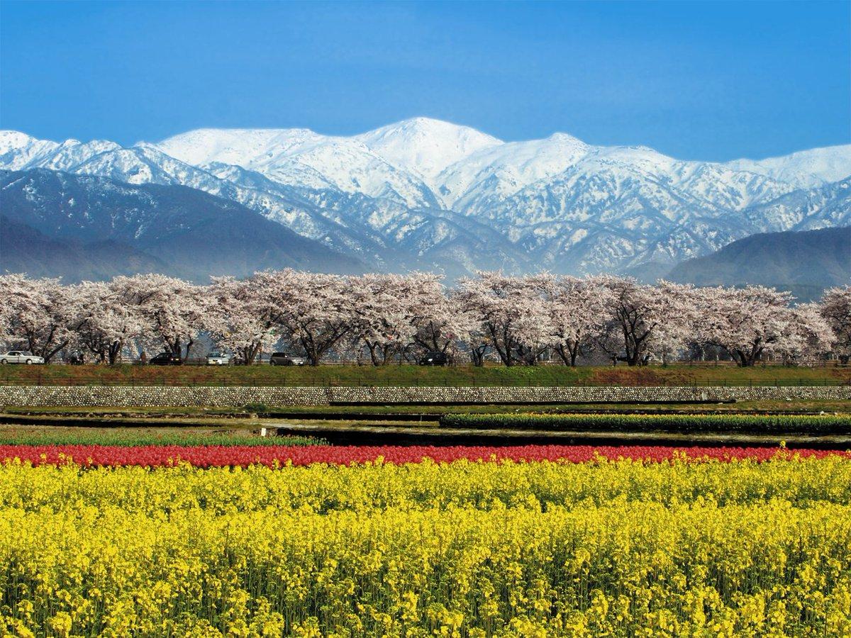 一度は見たい花絶景。旅気分で足をのばして行きたいのが、富山県の「あさひ舟川」。なんといっても、北アルプス×チューリップ×菜の花の三重奏!花の品種を選ぶことで、開花時期を合わせているそうですよ。春のミラクル絶景をぜひ。(写真/朝日町) https://t.co/Z5dx2WOOX8