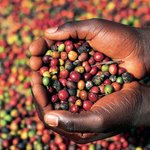 Why The Aroma Of Coffee Is Returning To Farmers Pockets