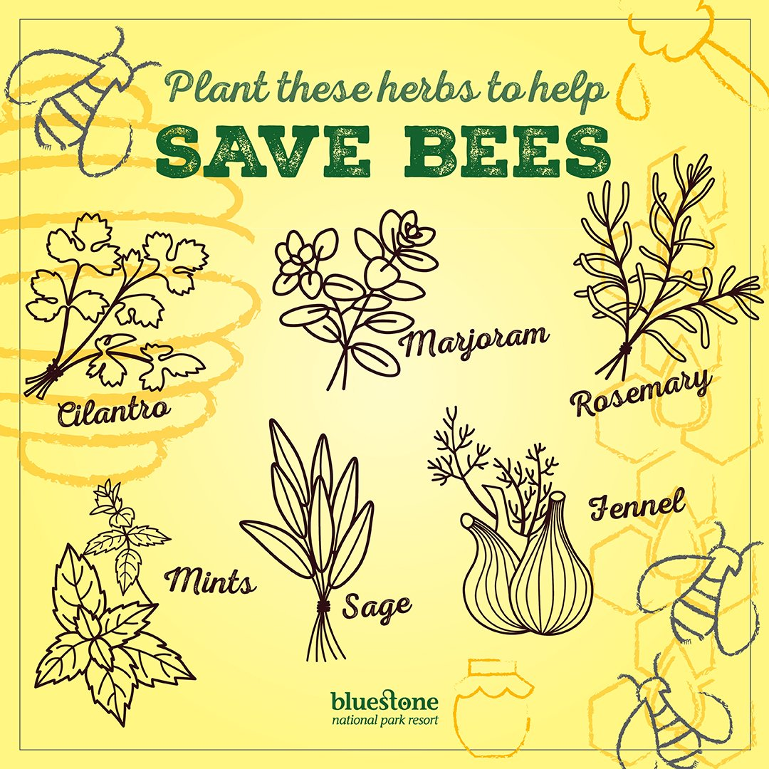 As it's #NationalGardeningWeek, why not plant some of these herbs? You might just help save the bees!