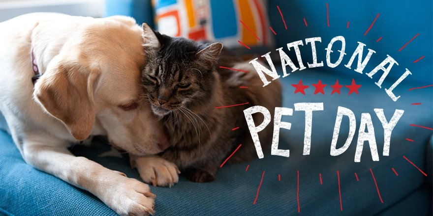 With Rachael's Rescue and #Nutrish, you can help shelter pets until they find their furever home. #NationalPetDay https://t.co/82BPtl9xhm