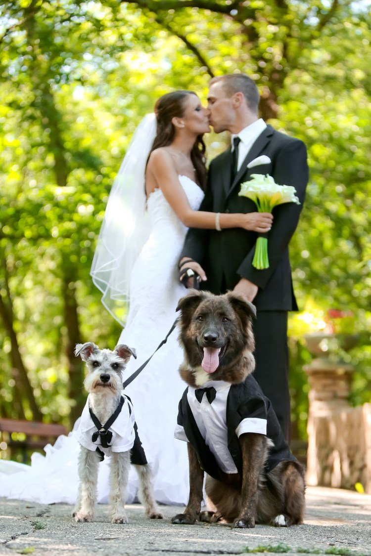 In honor of #nationalpetday - Dogs as Ring Bearers in a #RealWedding by @mwsandevents https://t.co/BKoeh2JMUB https://t.co/RgGwL78dsR