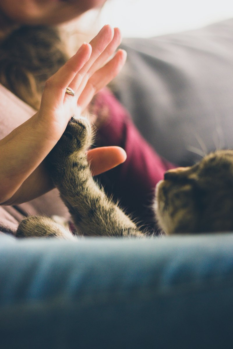 It's #NationalPetDay! Don't forget to give your furry friend(s) a high five and some extra lovin'! https://t.co/i1E527pCJD