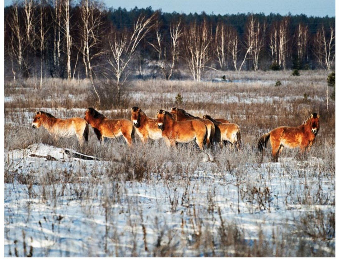 For #Chernobyl 30th: 2011 @wired piece I edited abt irradiated wildlife in Exclusion Zone  https://t.co/5uOVrOvZJQ https://t.co/s7foVNOYRL