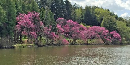 Have you been to @MortonArboretum lately? If the answer is no, this is what you're missing out on.  #spring https://t.co/dgeWKGmCsW
