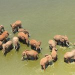 Poaching has fallen 50% in Tsavo thanks to our Aerial Surveillance: https://t.co/qRRe77VYTX #worthmorealive https://t.co/vK1iFaIKD2