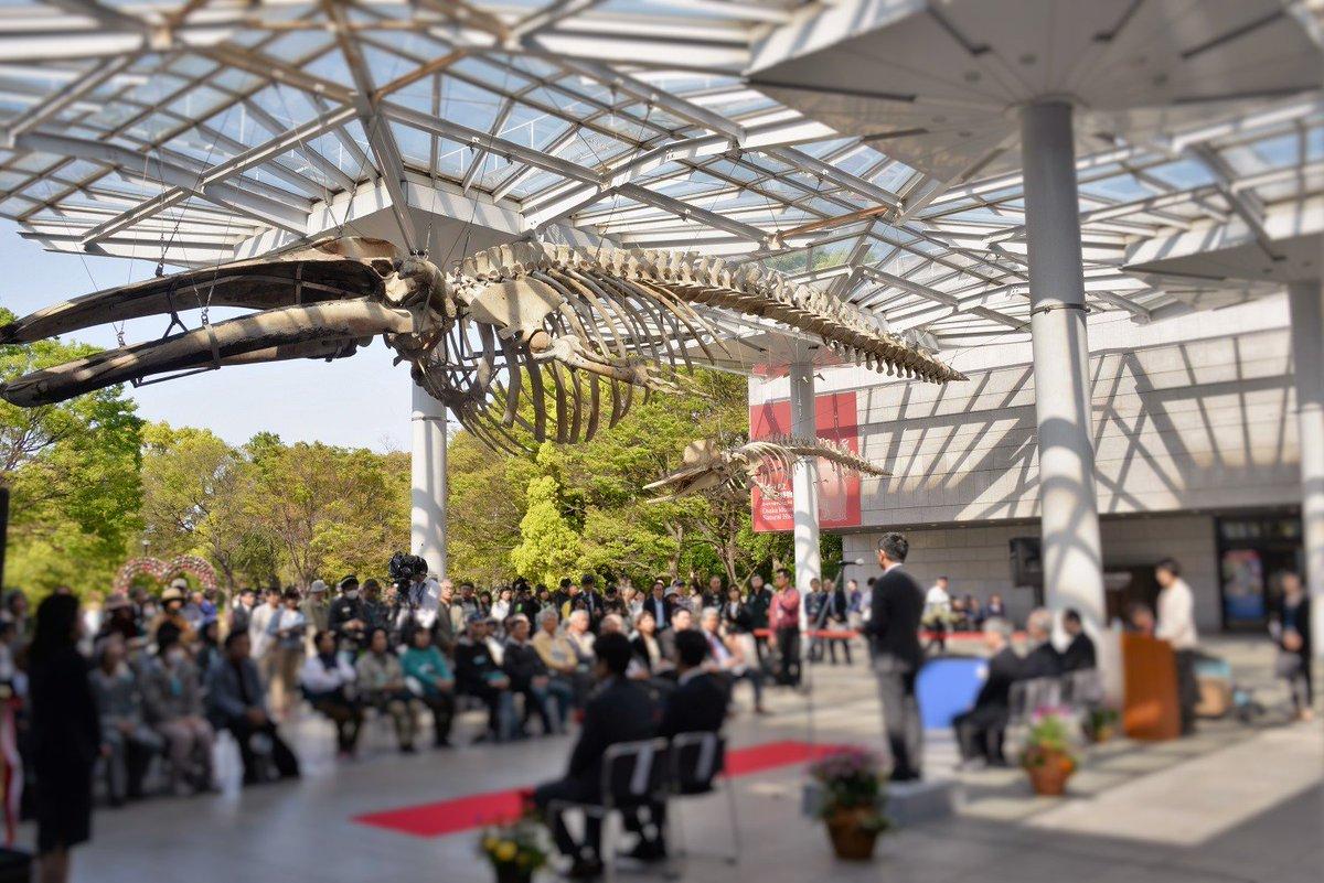 #生命大躍進 大阪展。いよいよ明日16日(土)に開幕です。前日の開会式が、クジラと骨格標本が下がる大きな屋根の下で、盛大に開かれました。長居公園、自然史博物館。 https://t.co/LhFqKsbb7h