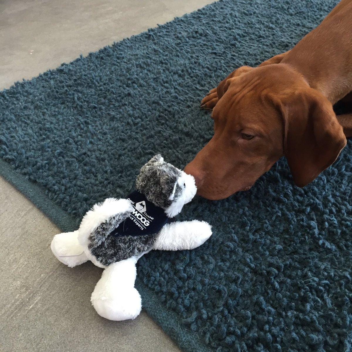 markabrinton: . @SnowdogApps thanks for the Snowdog, my dog is not sure what to think #MagentoImagine https://t.co/JhURdNtkAz