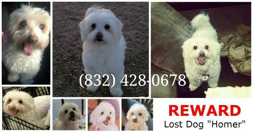 My friend's doggie is still missing-please call/text 832-428-0678 w/ any tips/sightings. Energy Corridor area https://t.co/28EoAdVr4D