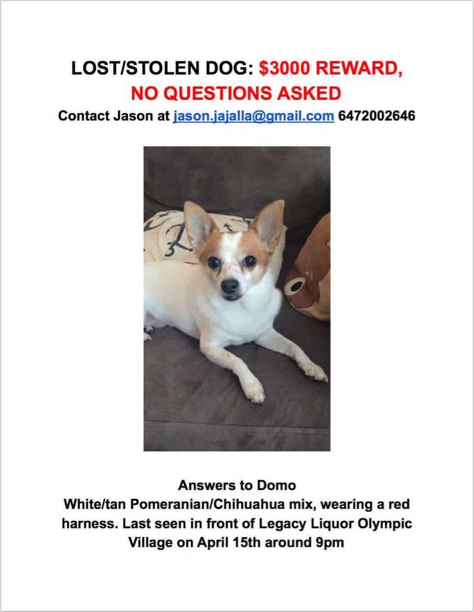 Vancouver - stolen dog from #OlympicVillage area last night. Reward offered. Please RT https://t.co/DIPS3fTpu9