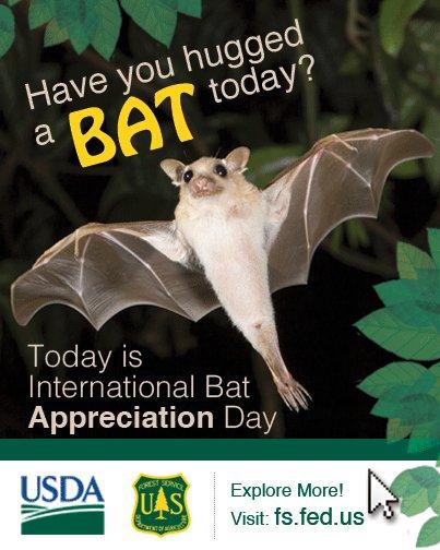 Today is Bat Appreciation Day! Learn more: https://t.co/DjH1kCijLB https://t.co/aBhPgqxOyd