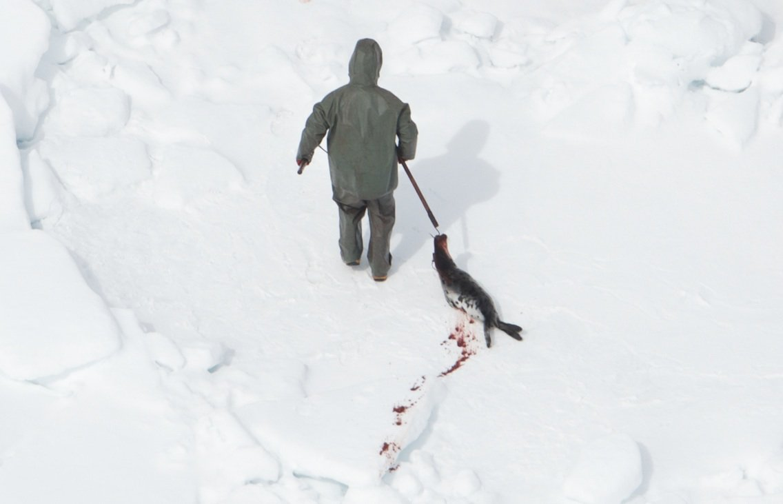 RT @RebeccaAldworth: The sealers are impaling pups on hooks and dragging them across the ice. This pup was moving his tail. #sealhunt https…