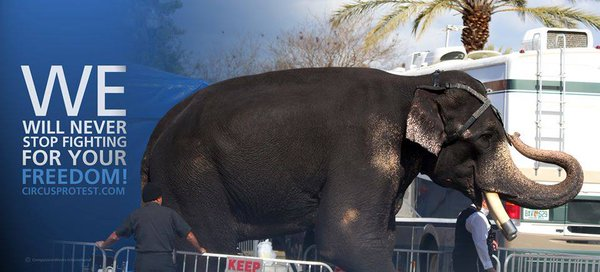 RT @CWIntl: We will never stop fighting to them until all the cages are EMPTY.  HELP: https://t.co/nfc7ZLcMSr #BoycottTheCircus https://t.c…