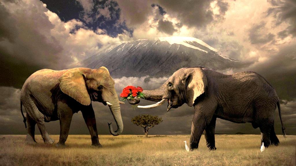 Картинки по запросу Всемирный день защиты слонов в зоопарках (International Day of Action for Elephants in Zoos, IDAEZ)
