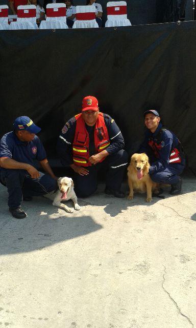 26 de Abril Día Internacional de los Perros de Búsqueda y Rescate...felicitaciones OWEN, BRENDA, BECA, LUNA, GOLIAT https://t.co/J4UqOTTQaC