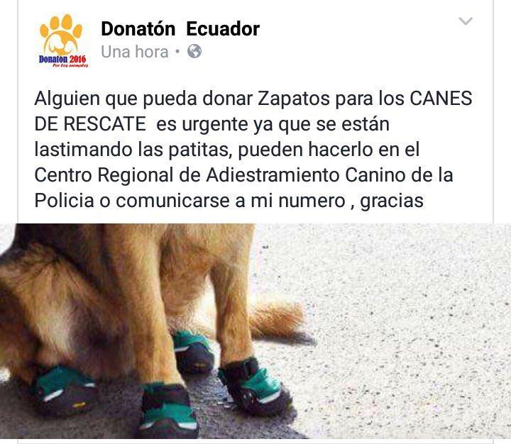 Necesitan zapatos para los canes de rescate ya que tienen sus patitas lastimadas Ayuden #EcuadorSolidario https://t.co/CJLEOandvj