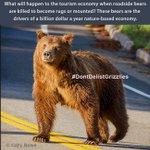 .@GovMattMead Nature based economy of Yellowstone area worth $1 billion/year. Bears drive it https://t.co/RVBUoEazpC #DontDelistGrizzlies