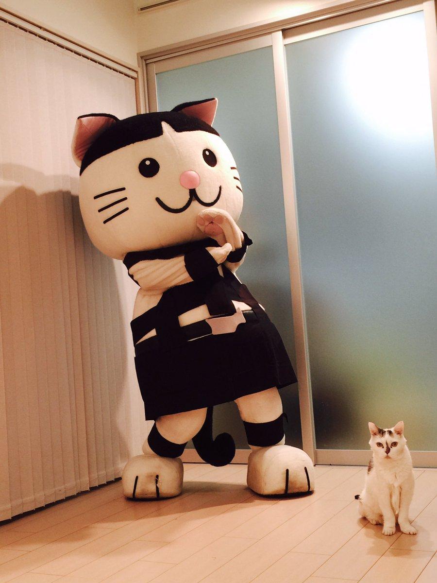 (=゚ω゚)ノ肉球たちが〜猫好きを刺激する〜プニプニ魅惑のマーメイド〜 https://t.co/xqQ1ty12CZ