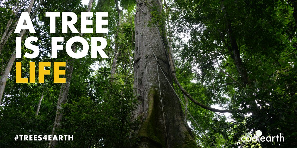 RT @coolearth: Did you know that a rainforest tree produces 324 litres of water a year? #EarthDay2016 #Trees4Earth https://t.co/QL8fGzS0fv