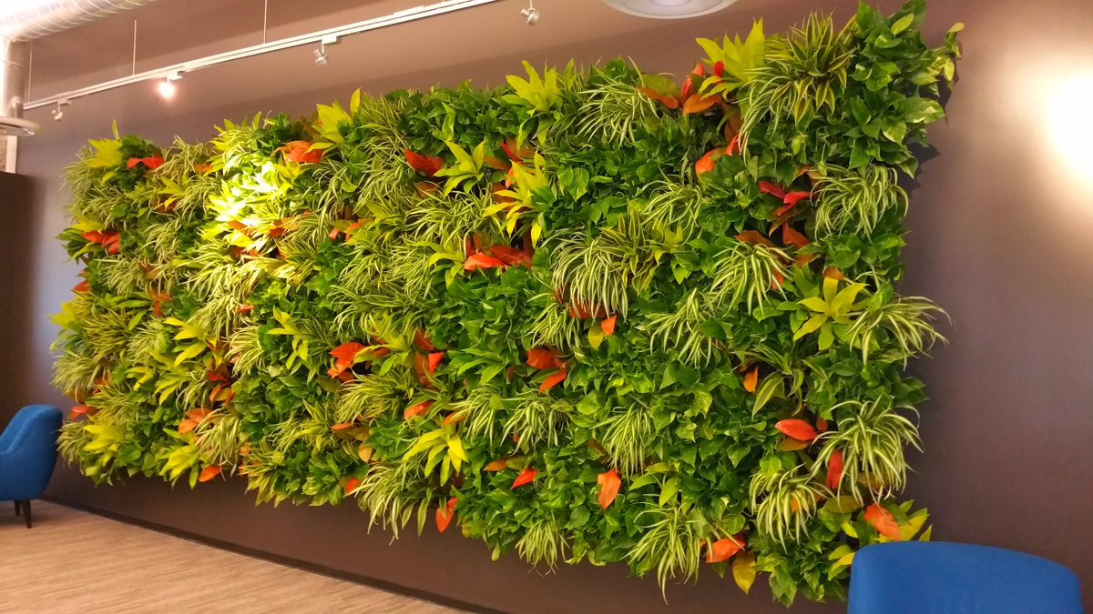 It's #GreenWallWednesday! This green wall brought nature indoors to this San Francisco based tech company's office. https://t.co/THLdnkAvYy