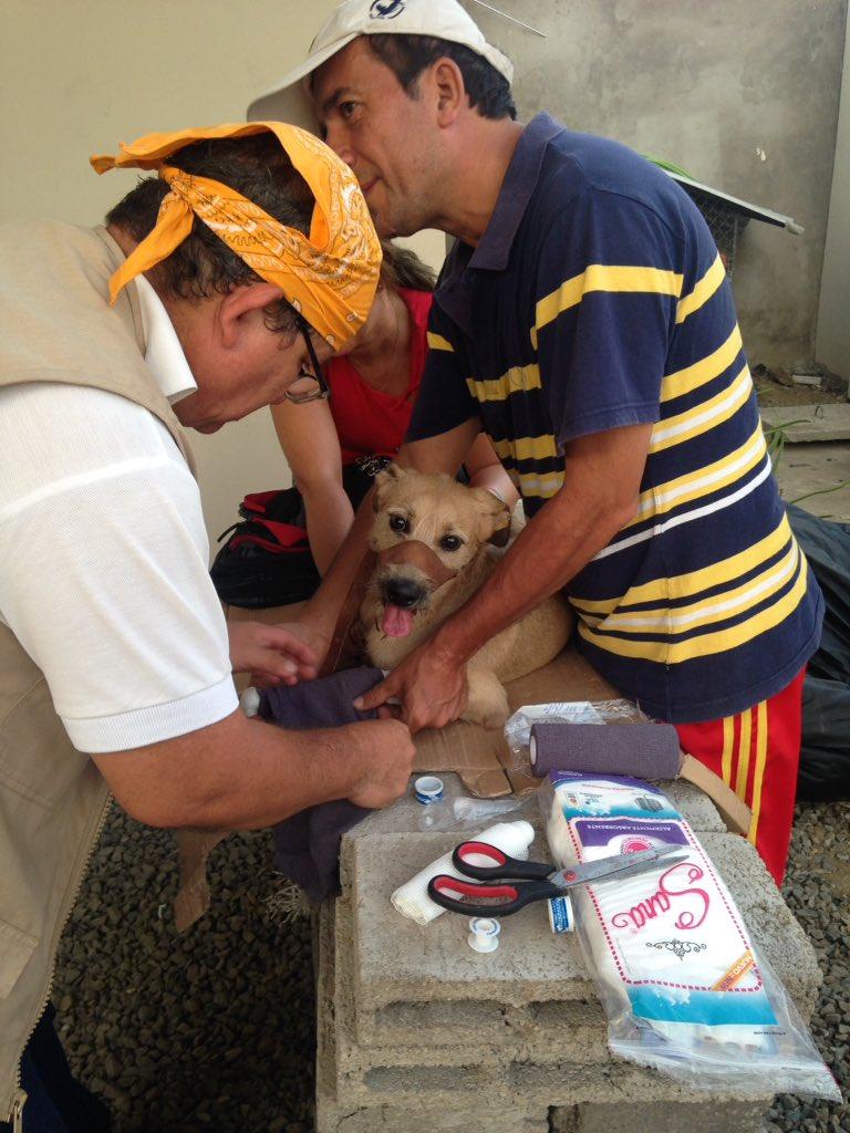 Mil gracias por las donaciones de insumos,y a los veterinarios voluntarios un gracias gigante por tanto amor. https://t.co/PiIgnhDz9X