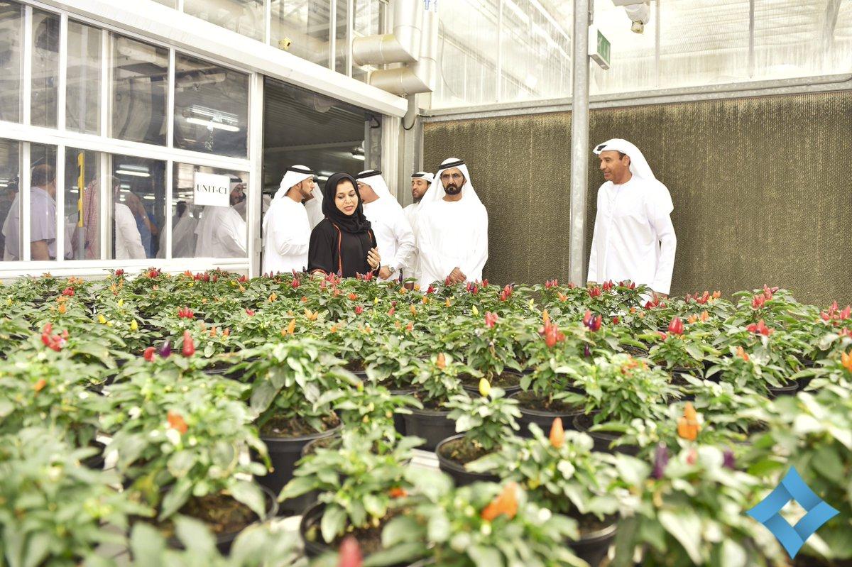 Hhshkmohd Tours Dmunility S Plants Flowers Nursery In Warsan Dubai