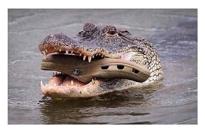 just look how instinctively the mother crocodile carries the baby