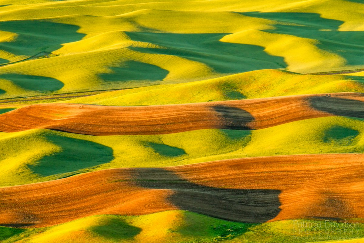 Morning Shadows on the Palouse • Morning light casting shadows on the wheat fields. Viewed from Steptoe Butte. https://t.co/1cgBPnXtCp