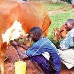 Court Lifts Ban On Unpacked Milk