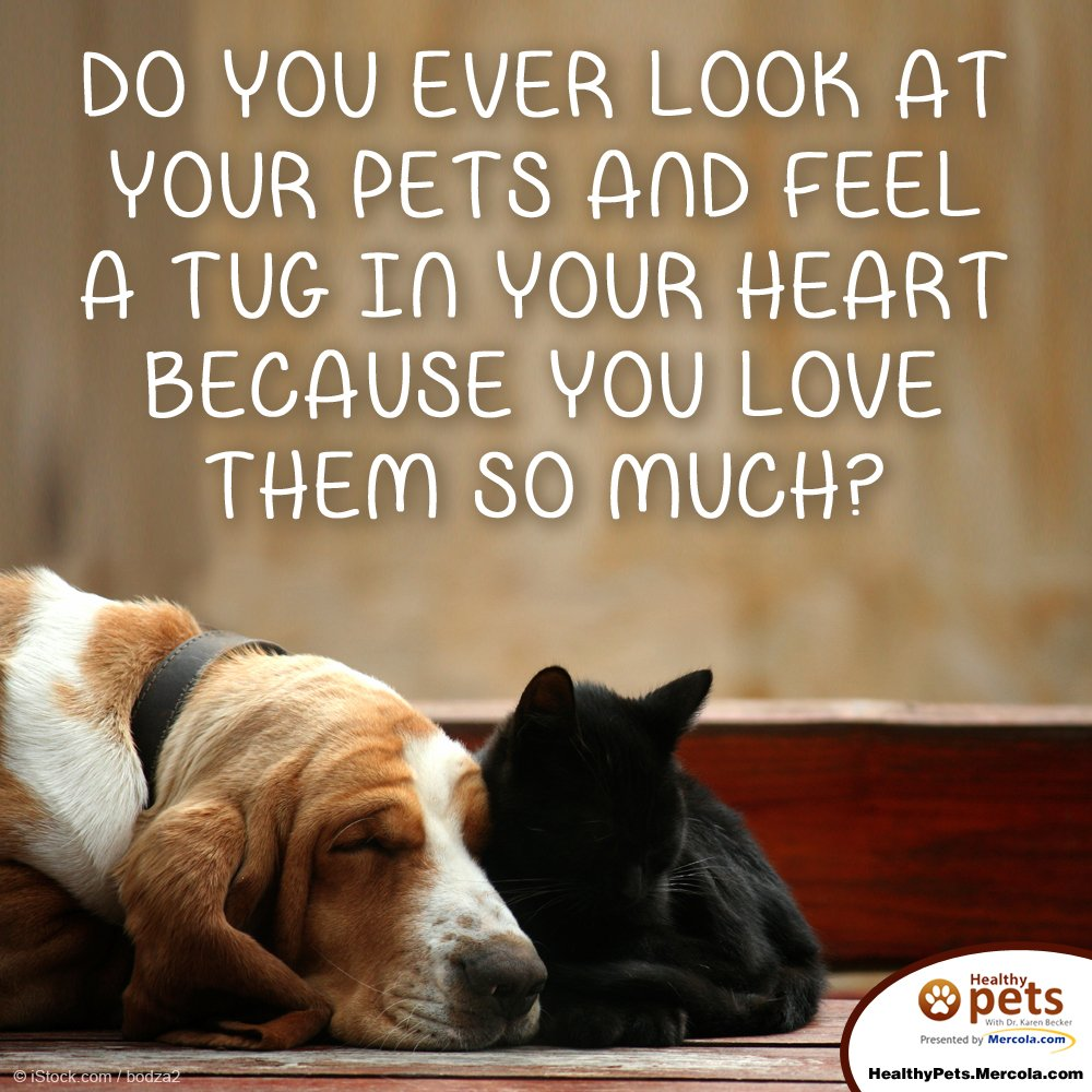 Do you ever look at your pets and feel a tug in your heart because you love them so much? https://t.co/D2KLgFMNrk