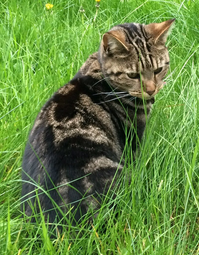 @thecatreviewer another visit from neighbour tabby today. Not seen her for months - twice this week! Love her! 11/10 https://t.co/O5F97xBT1I