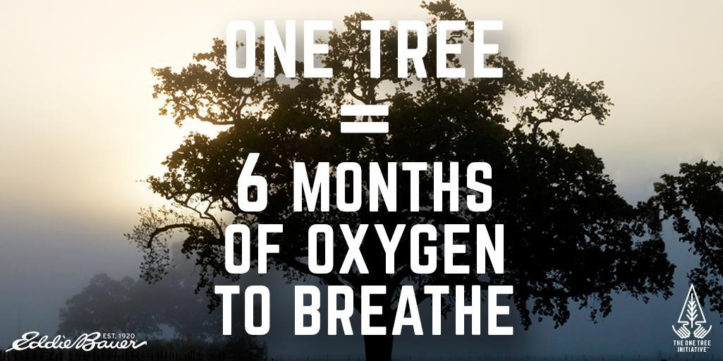 We're matching your donations to the #onetree Initiative, up to 75K trees:  https://t.co/Jw34ZgzFjF | #earthweek https://t.co/zQYVUvMI3O